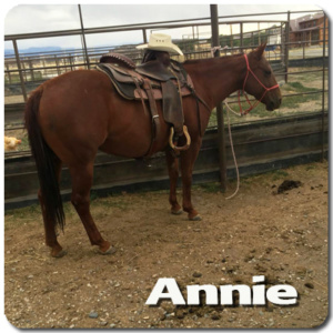 5 yr Old Quarter Horse mare in Training